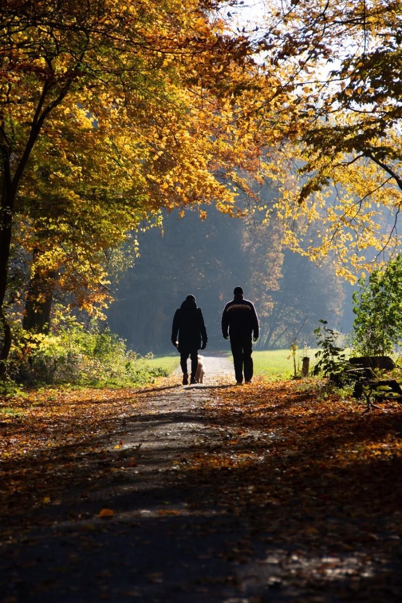 wandelen bos